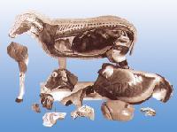 Mô hình giải phẫu Cừu